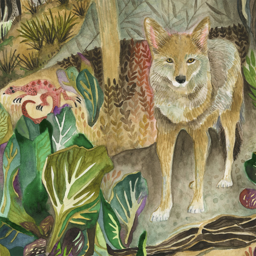 """""""Coyote"""" detail"""