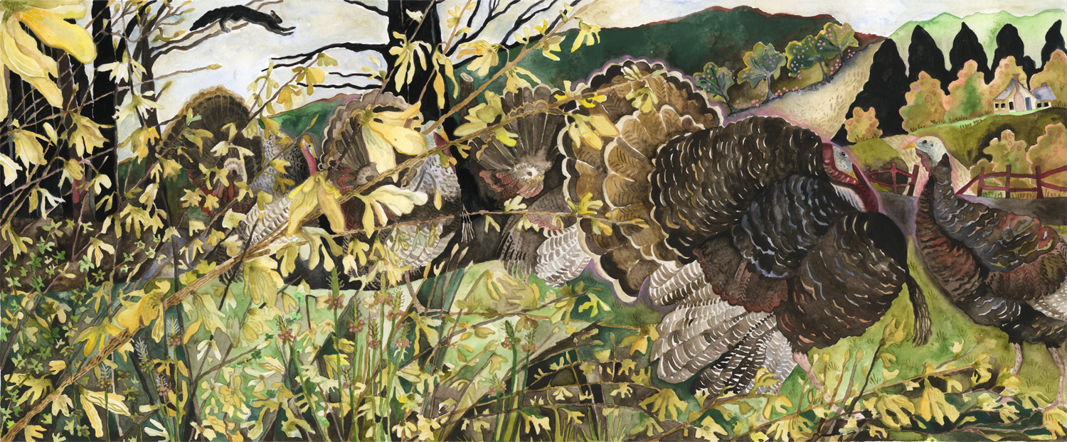 Turkeys and Forsythia