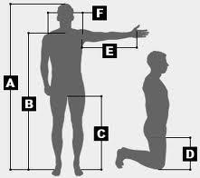 Body Measurements.jpeg