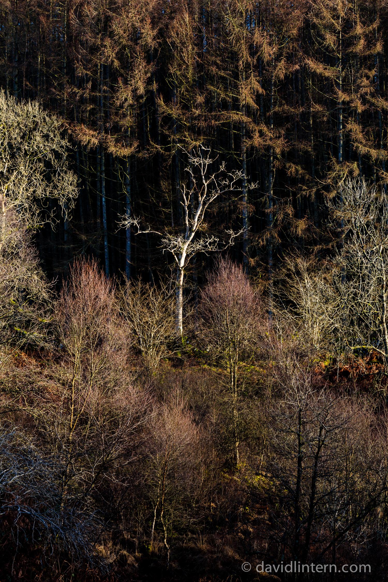 Lintern-4311.jpg