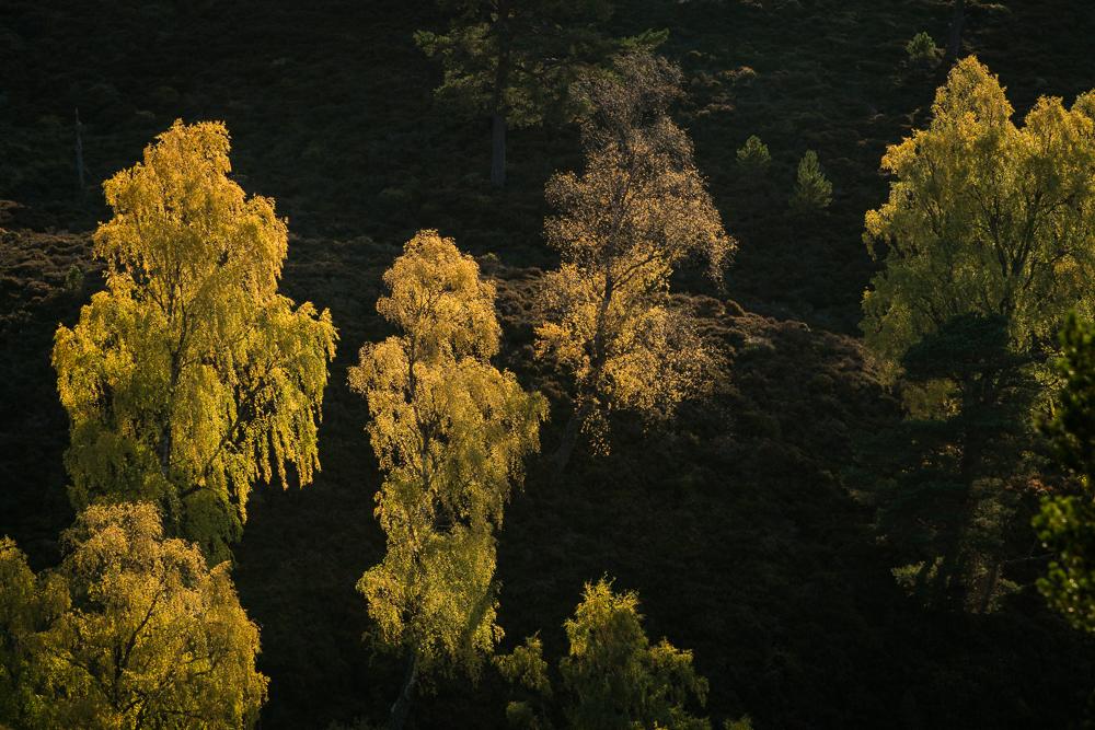 Lintern-08672.jpg