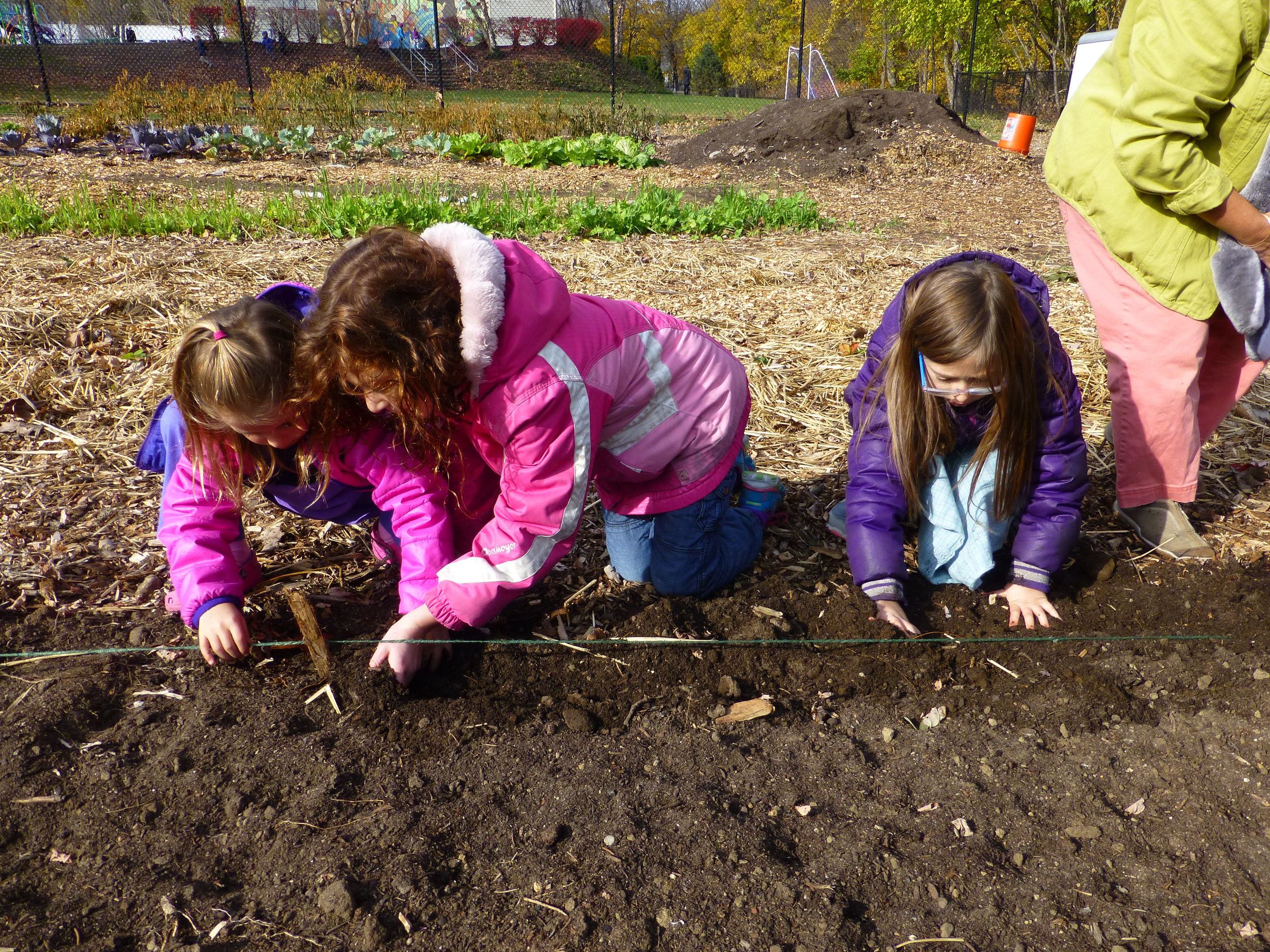 students planting garlic