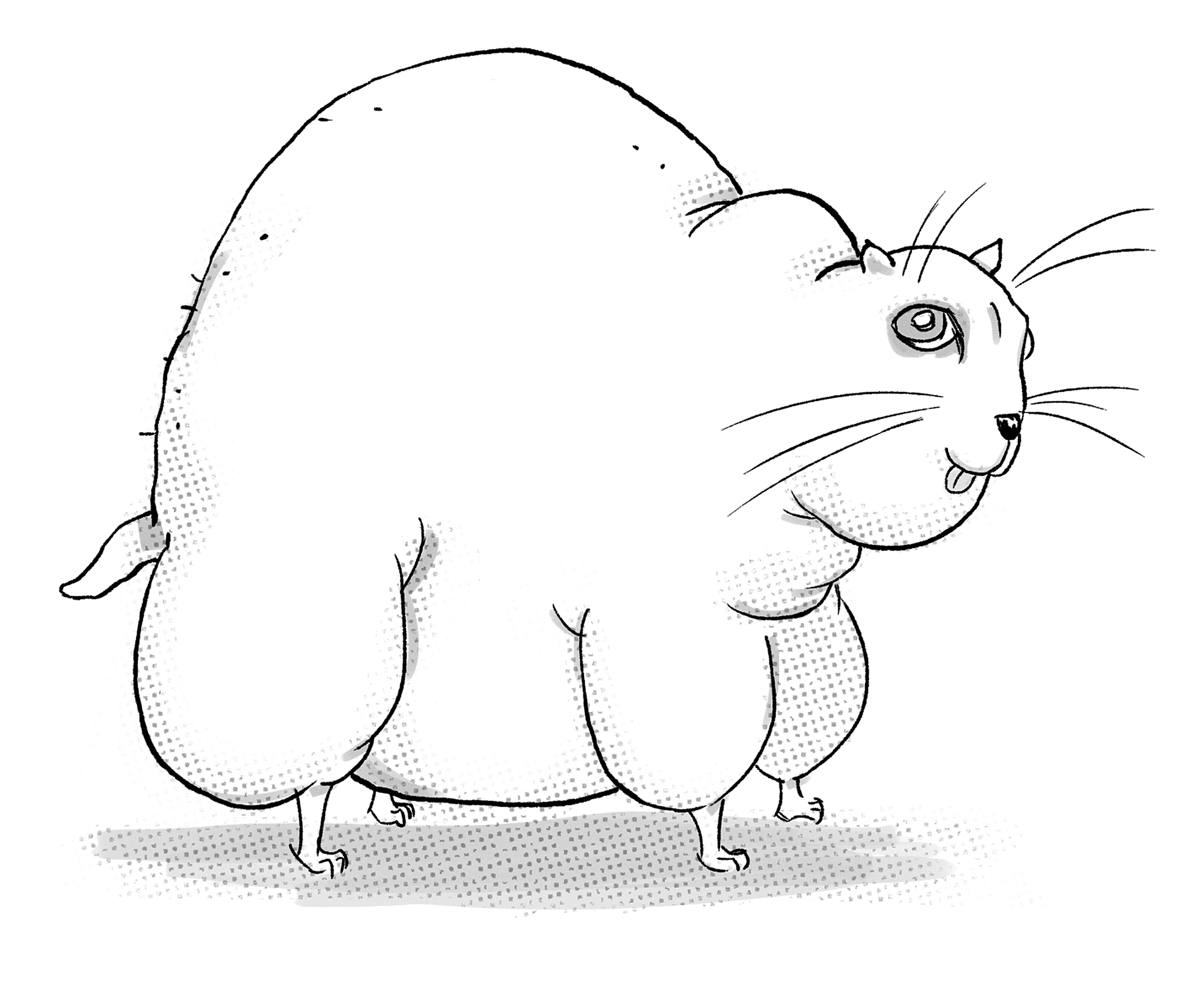 john-bergin-fat-cat.jpg