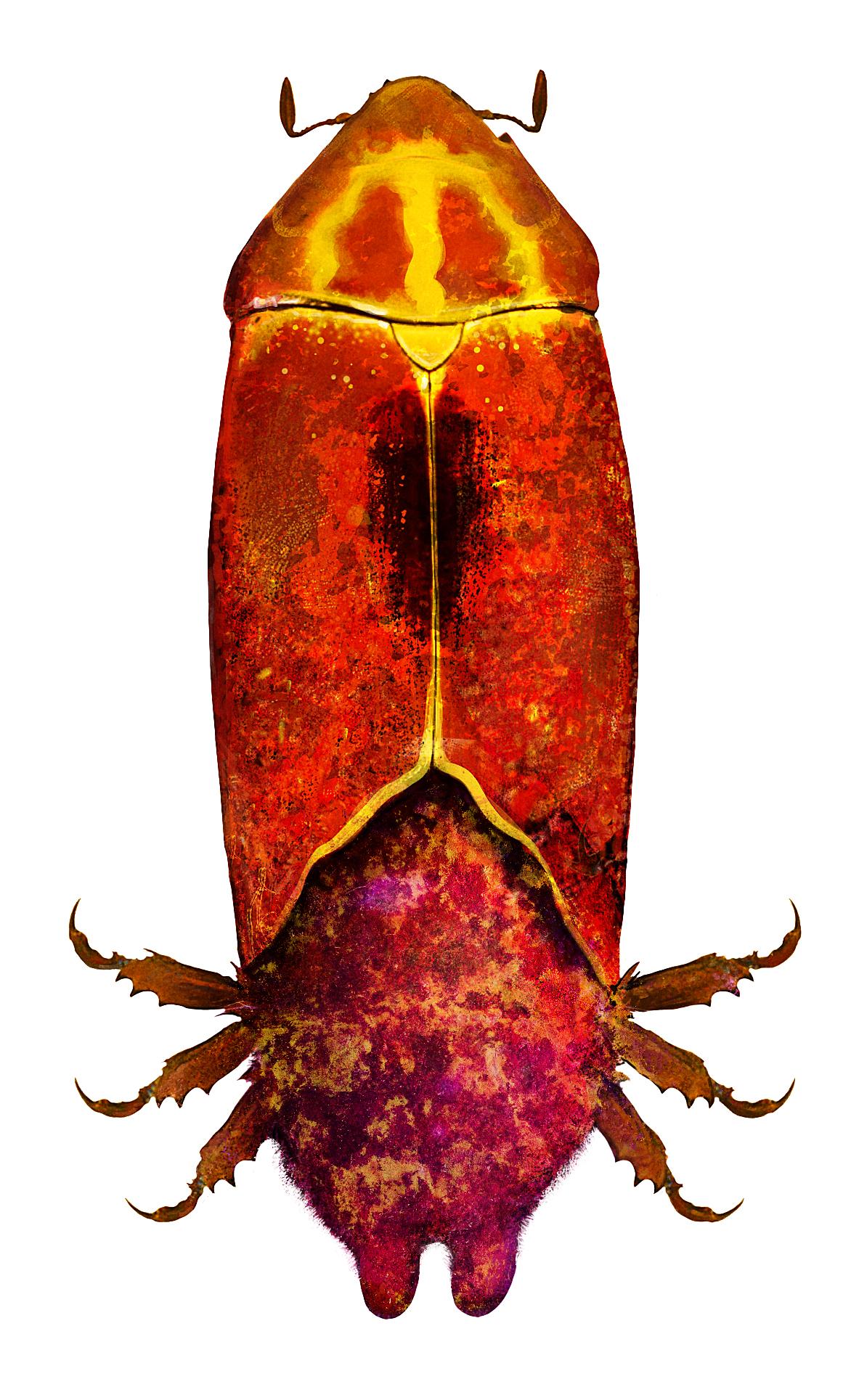 john-bergin-insectte.jpg