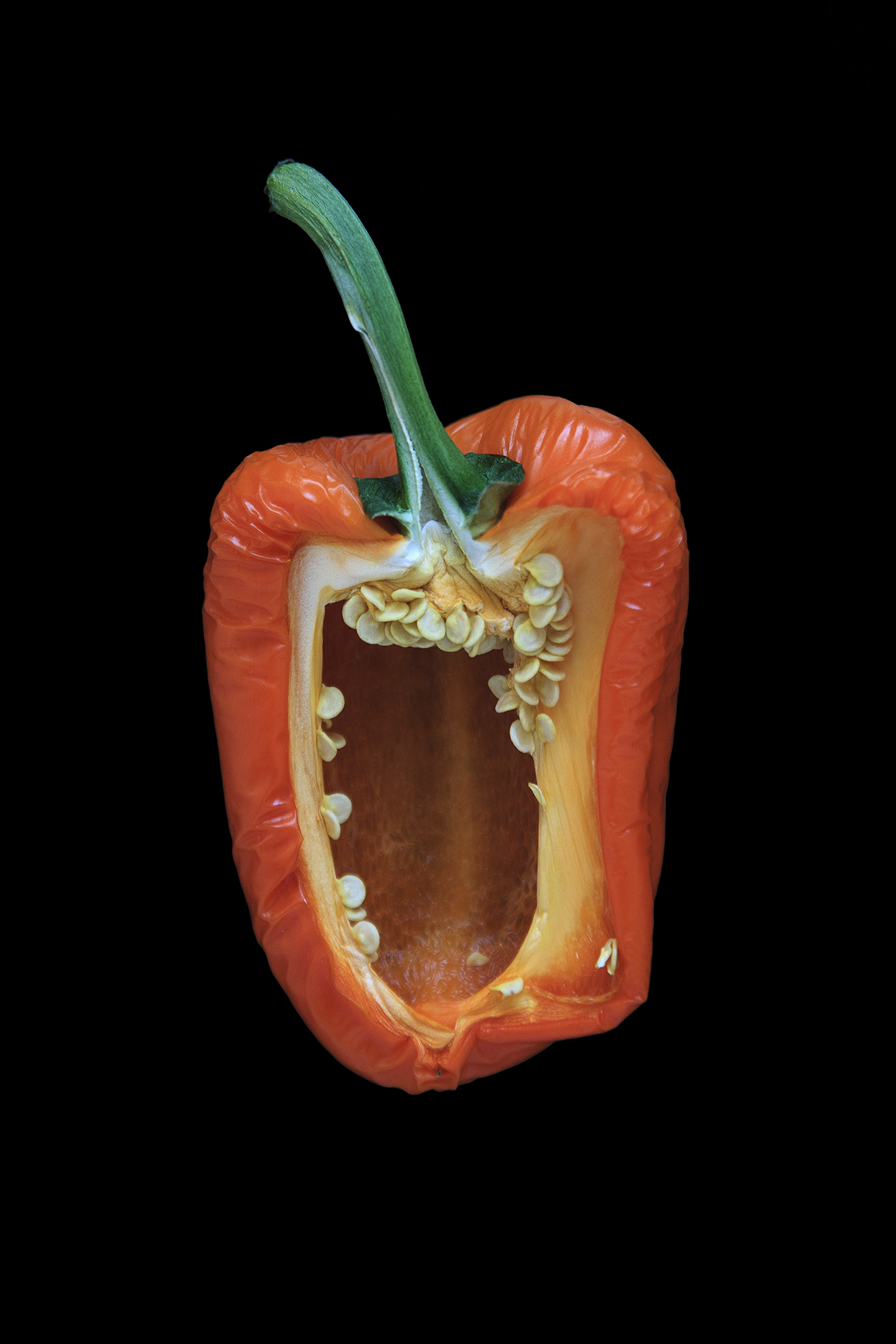 Orange Pepper, Day Five