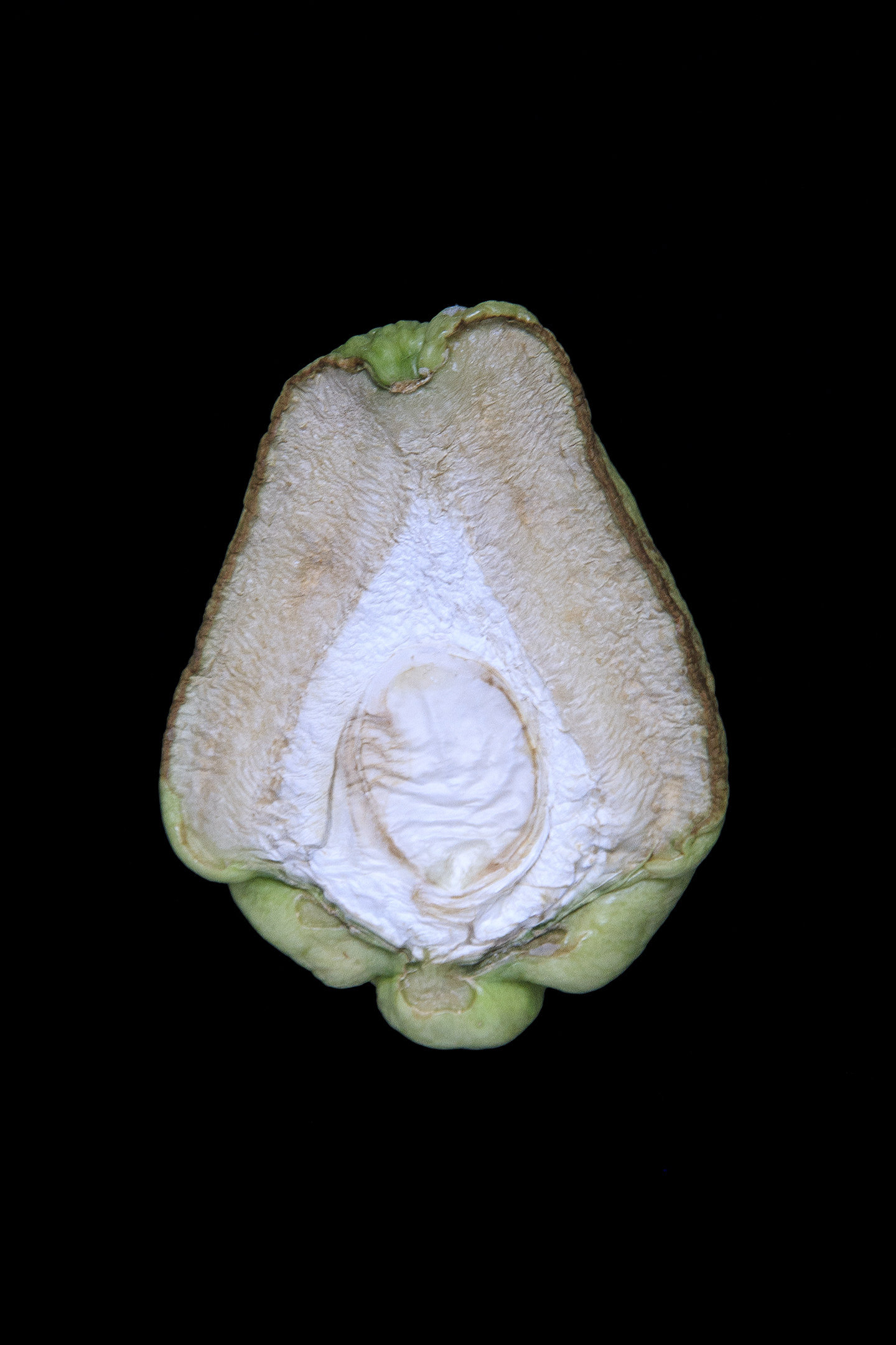 Chayote, Day Seven