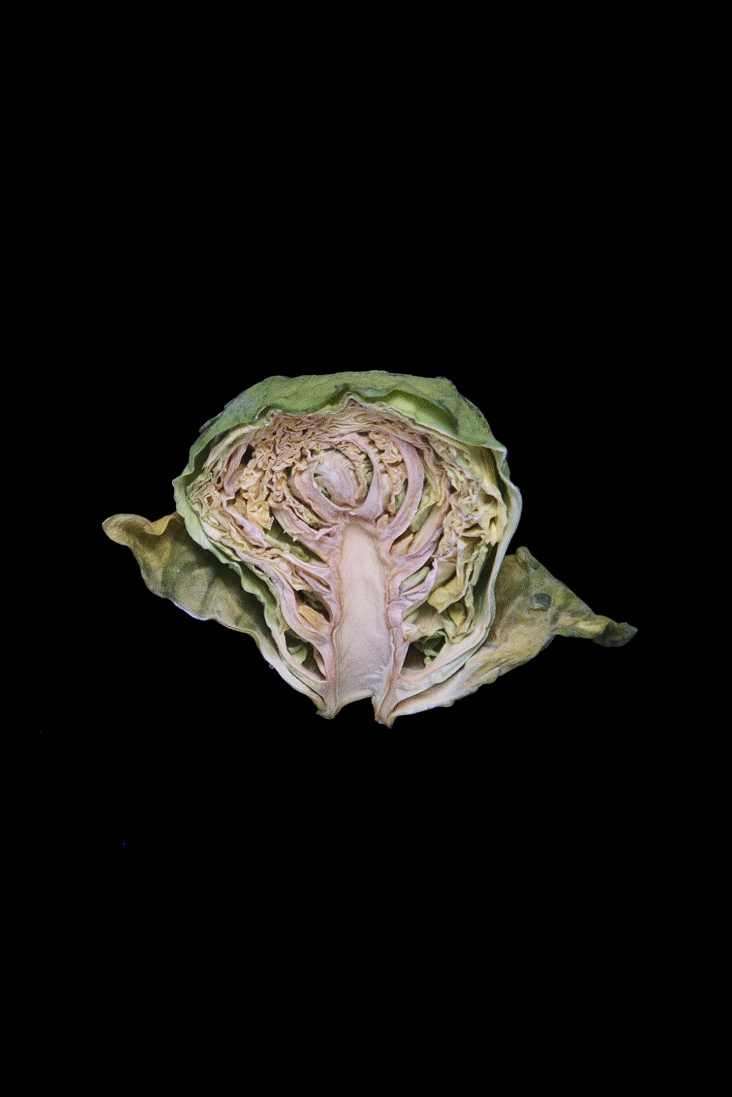 Brussels Sprout, Day Seven
