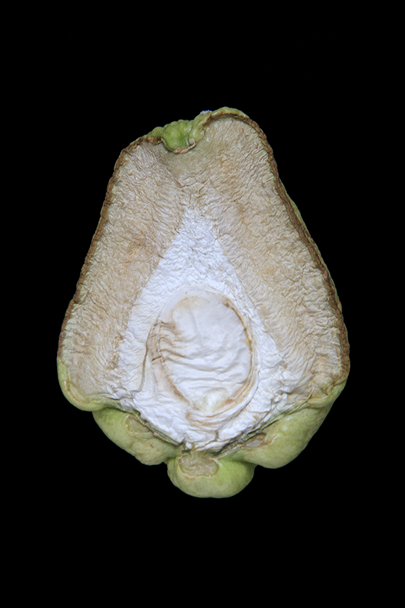 Chayote, Day Eight