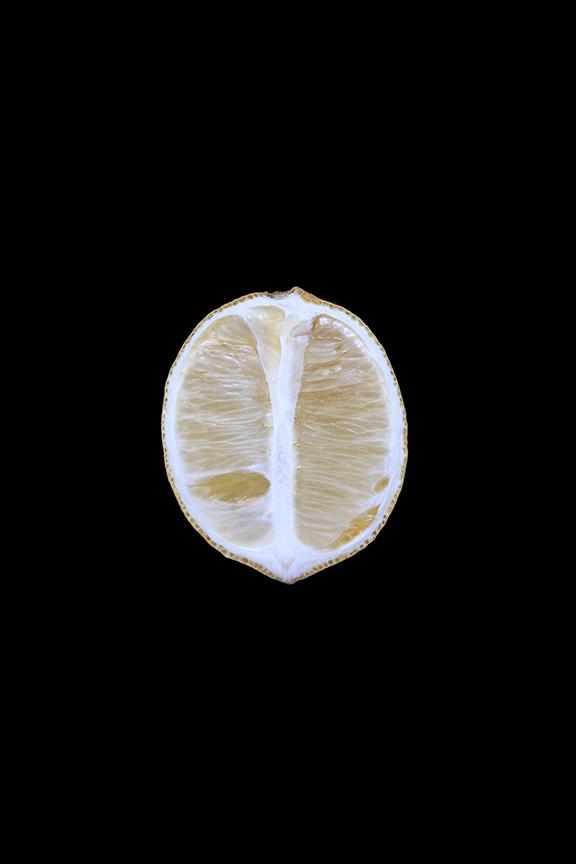 Lemon, Day Eight