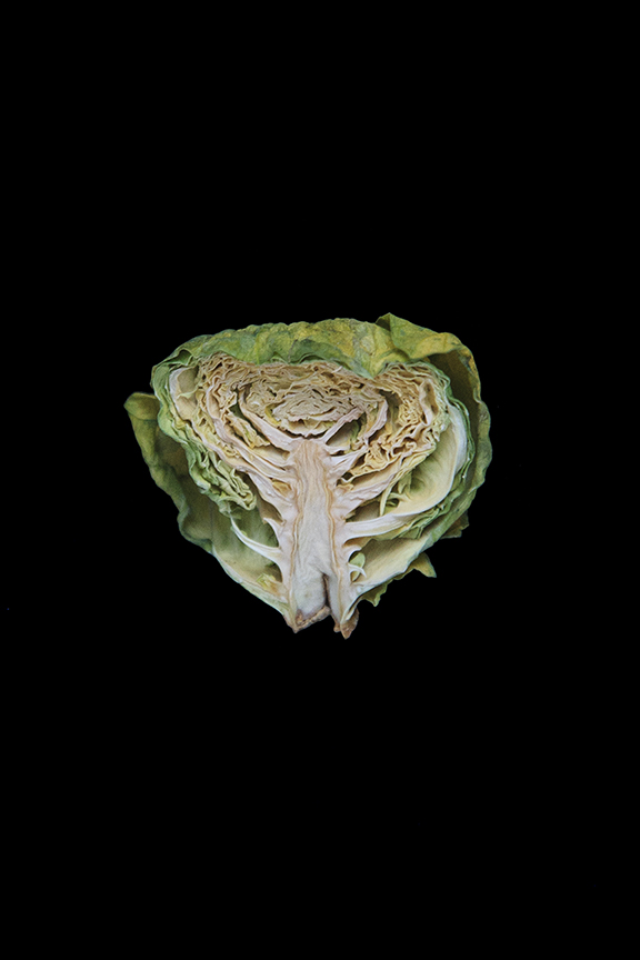 Brussels Sprout, Day Eight