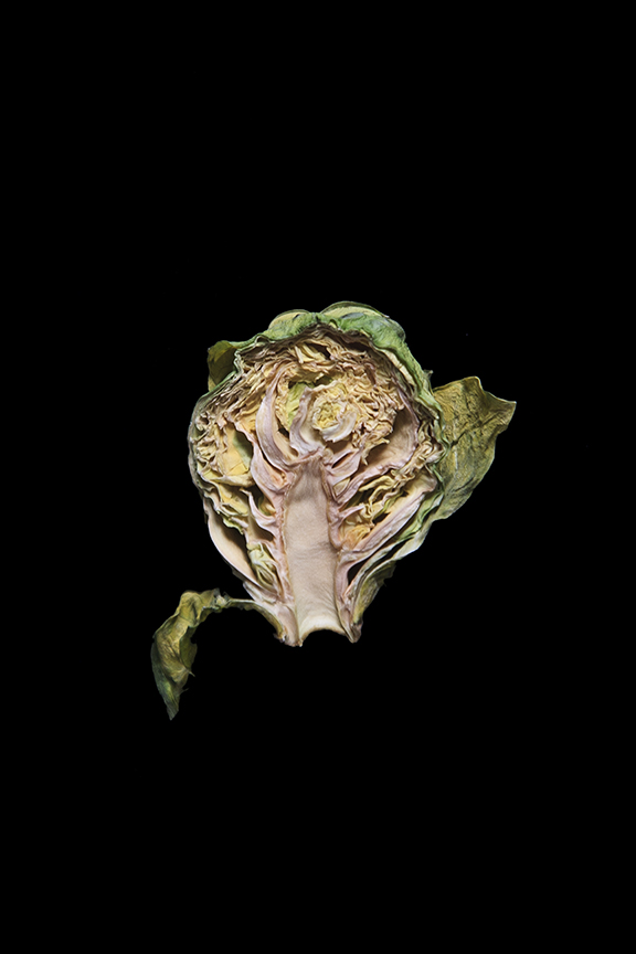 Brussels Sprout, Day Nine