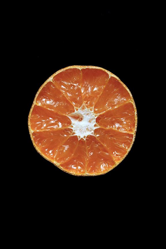 Murcott Mandarin, Day Nine