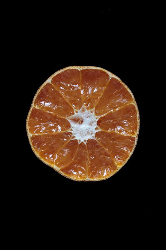 Murcott Mandarin, Day Ten