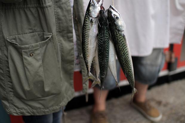 07_mackerel.jpg