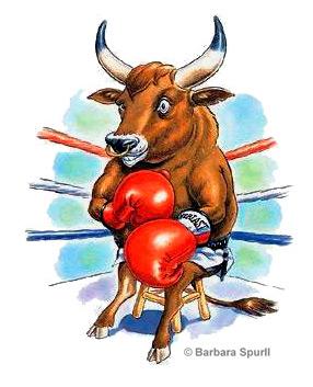 Boxing Bull
