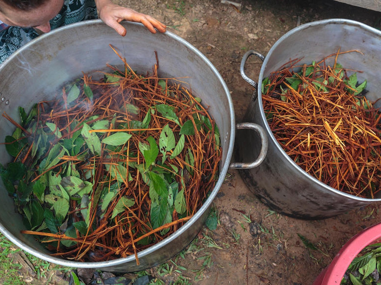 ayahuasca-brew-legal.jpg
