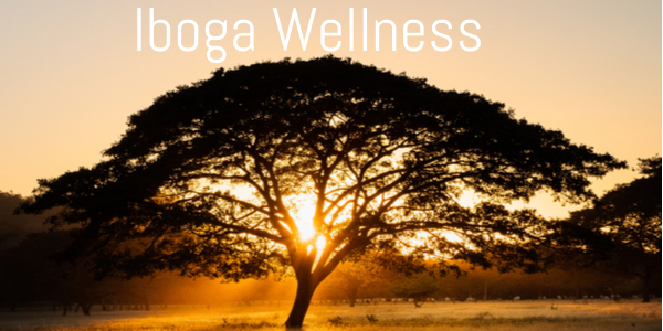 guanacaste-tree-iboga-wellness-center.jpg