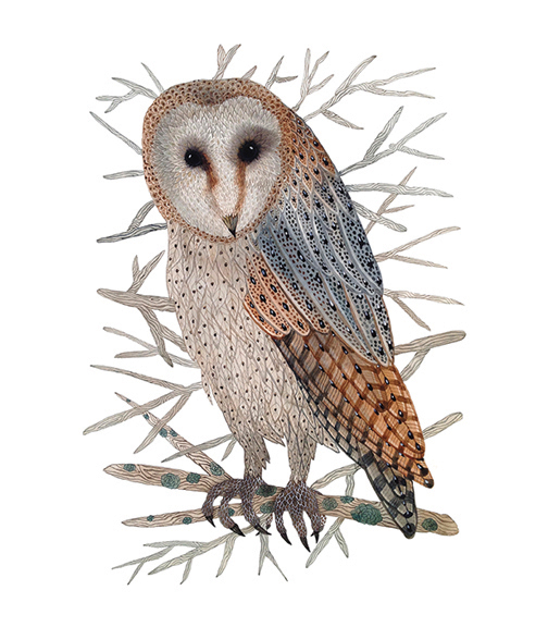 Barn Owl,  watercolor on paper, Golly Bard | Holly Ward Bimba   © all rights reserved