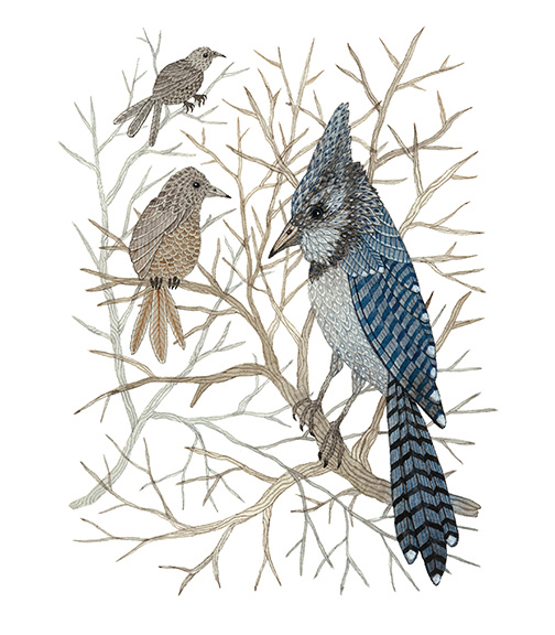 Blue Jay High Up in the Trees,  watercolor on paper, Golly Bard | Holly Ward Bimba © all rights reserved