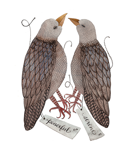 Mourning Dove Specimens,  watercolor on paper, Golly Bard | Holly Ward Bimba   © all rights reserved