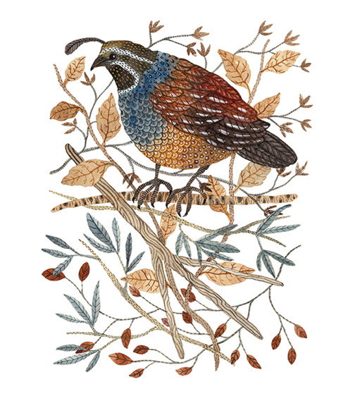 Quail,  watercolor on paper, Golly Bard | Holly Ward Bimba   © all rights reserved