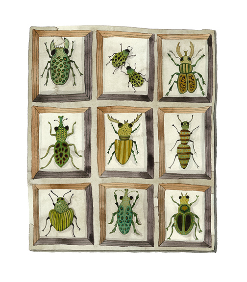 Beetles and Weevils Collection,  watercolor on paper, Golly Bard | Holly Ward Bimba   © all rights reserved