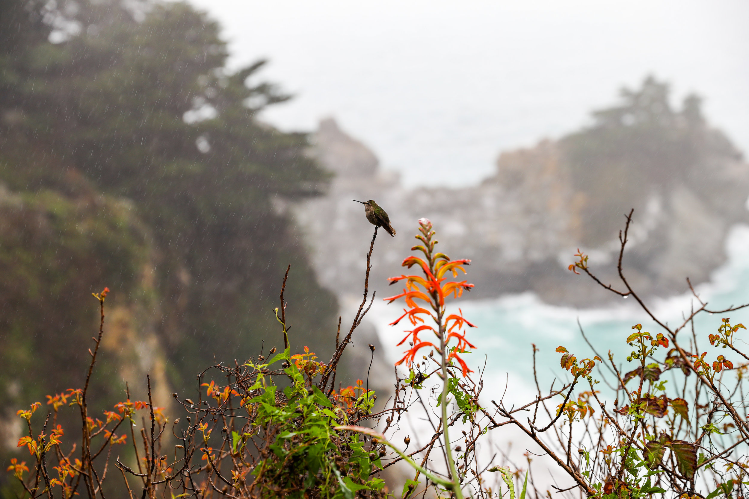 california-6642.jpg