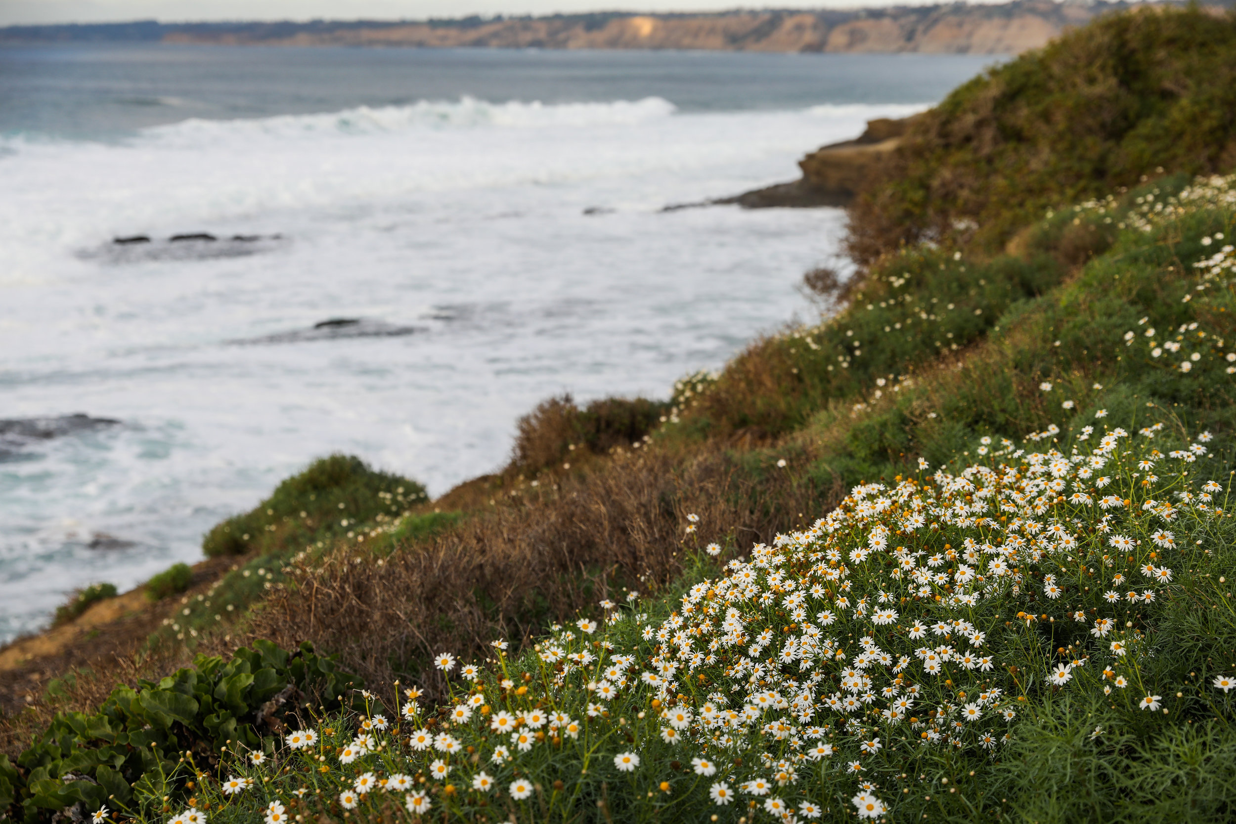 california-6859.jpg