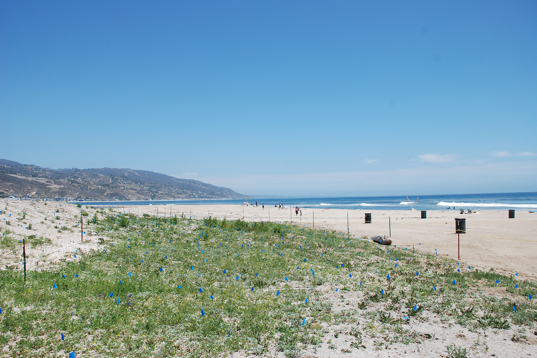 12-rcd-stevens-bunch-design-malibu-lagoon-surfrider-beach.JPG