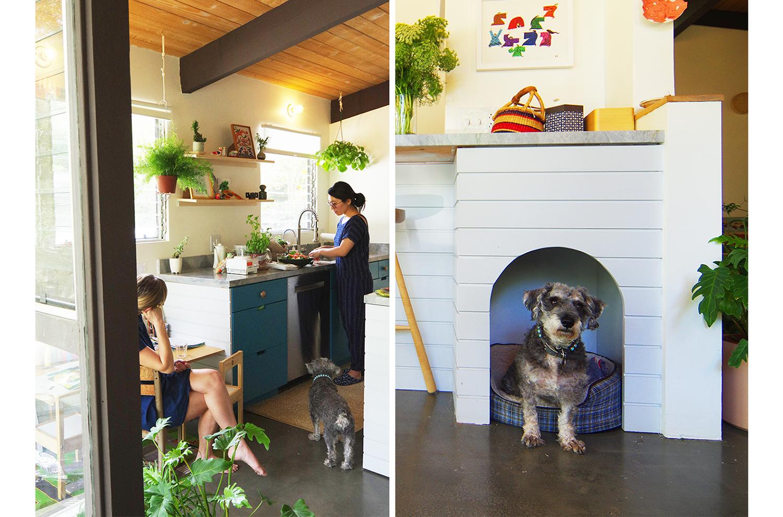 0-bunch-design-itabashi-residence-dog.jpg