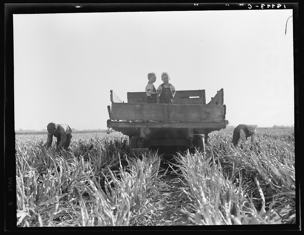 Near Manteca, California. Formerly rehabilitation clients, now operating own farm under Tenant Purchase Act. A year and a half ahead on their payments. Family labor harvesting milo maize. Average loan for purchase of farm and improvements in San Joaquin County is seven thousand four hundred and sixty-five dollars.