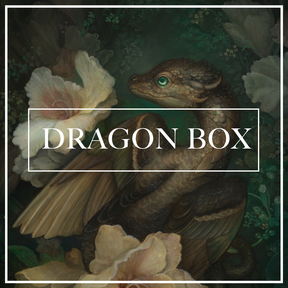 DragonBoxad2.jpg