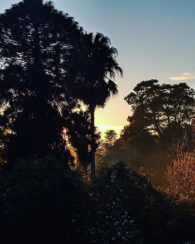 ...wake me up when winter is over ❄️ • • • #melbourne #winter #royalbotanicgardensvic #royalbotanicgardens #australia #visitaustralia #seeaustralia