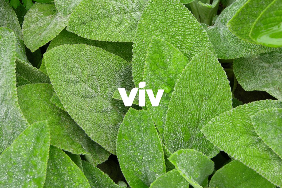 viv-01.jpg