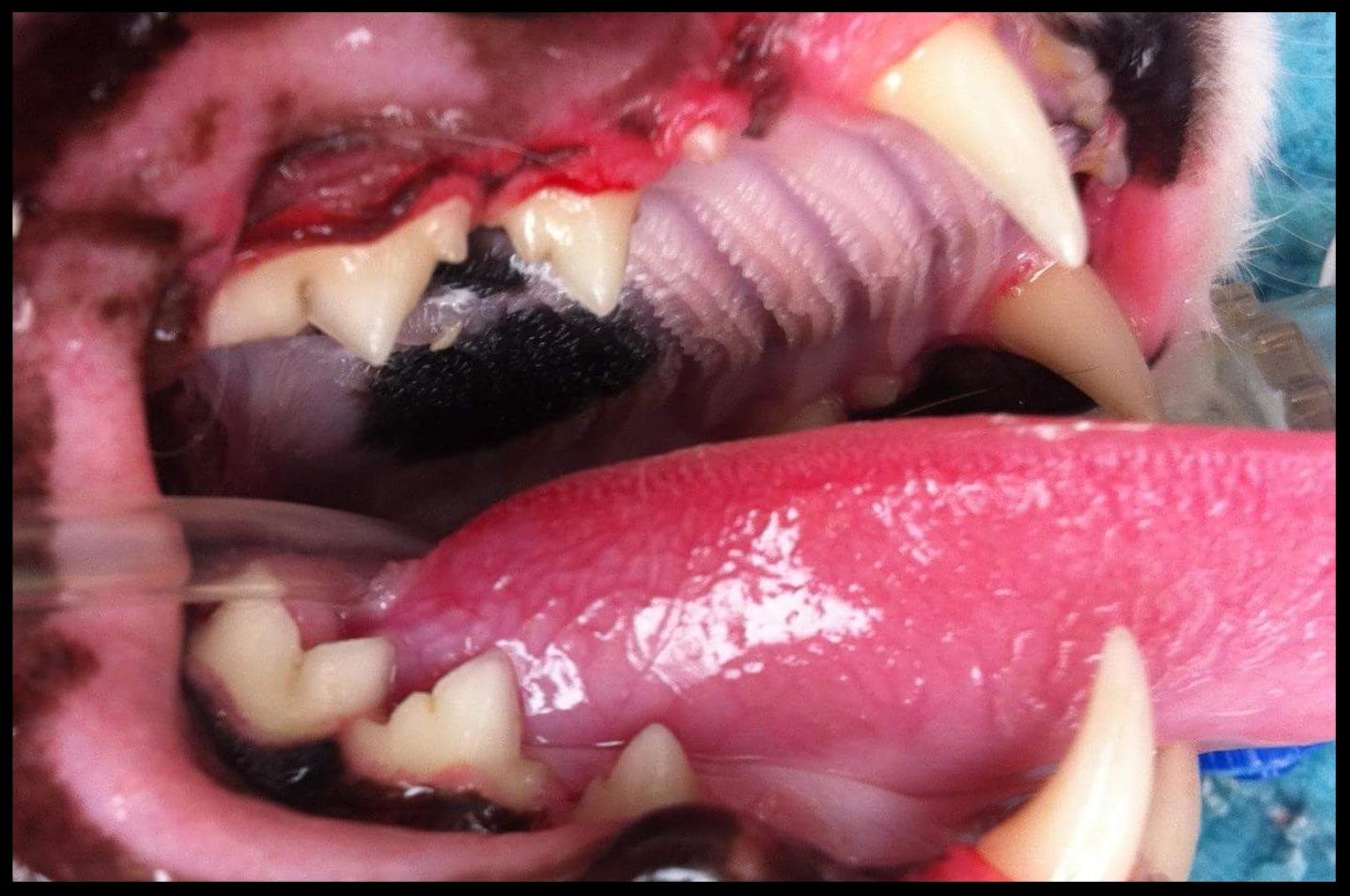 After Dental