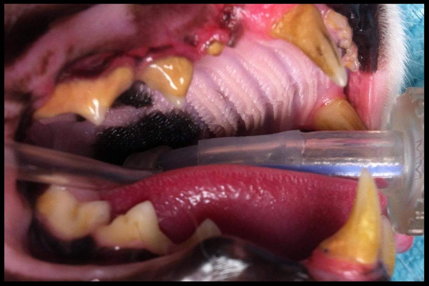 Before Dental
