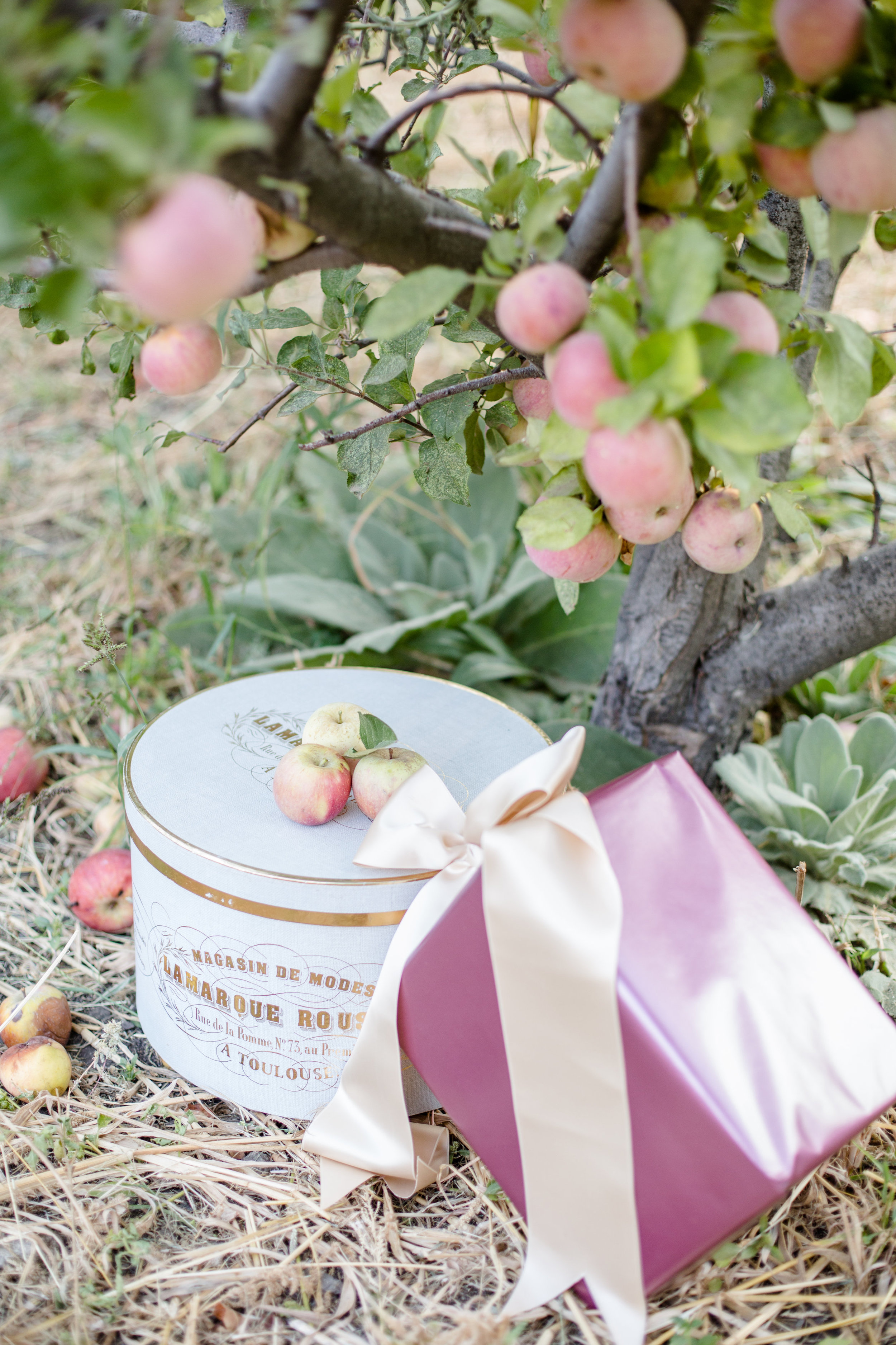 01 apple orchard-01 apple orchard-0036.jpg
