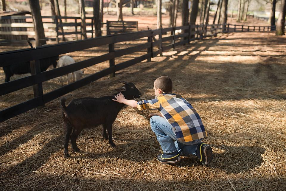 Goats at Serenbe.