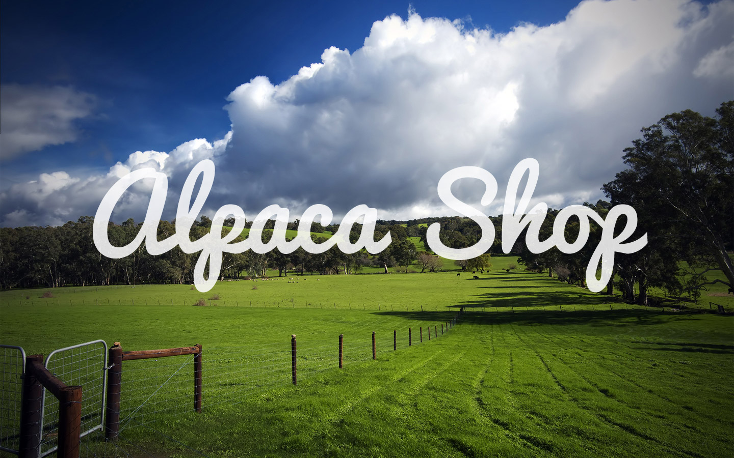 alpacashop.jpg