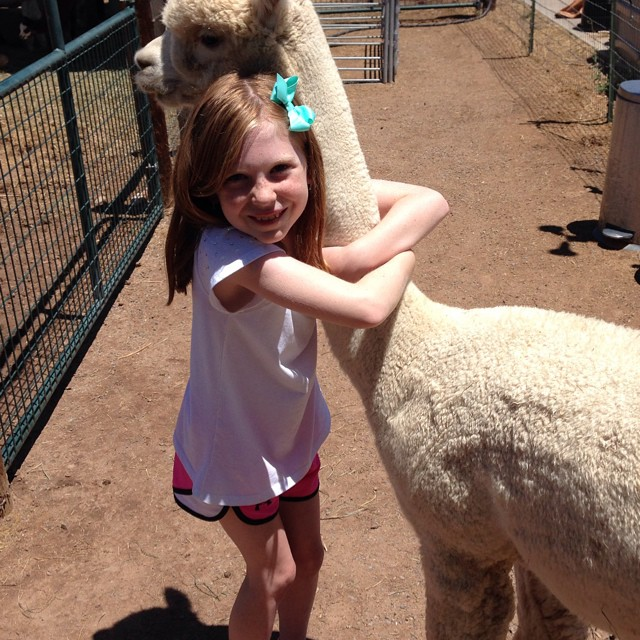 Love that alpaca
