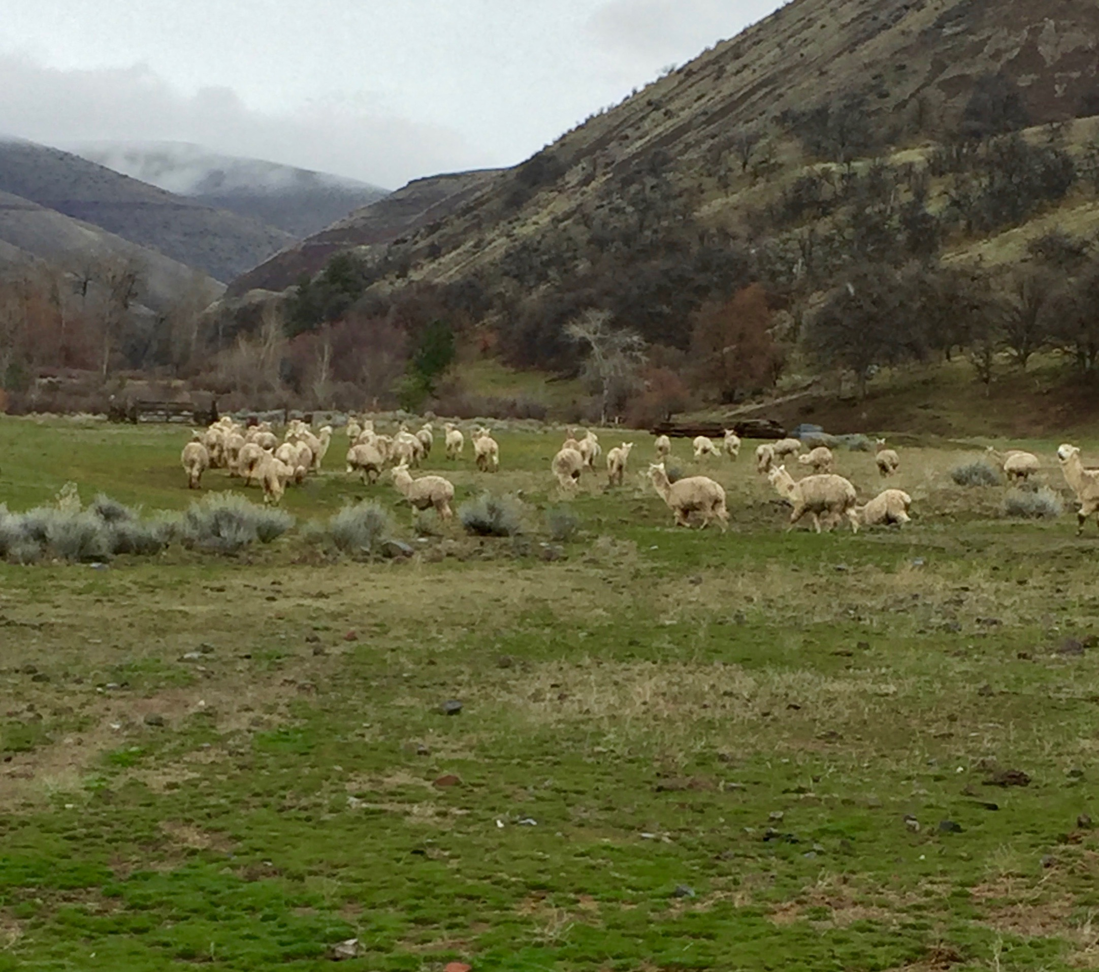 Late winter on the ranch... Looks like the Altiplano...