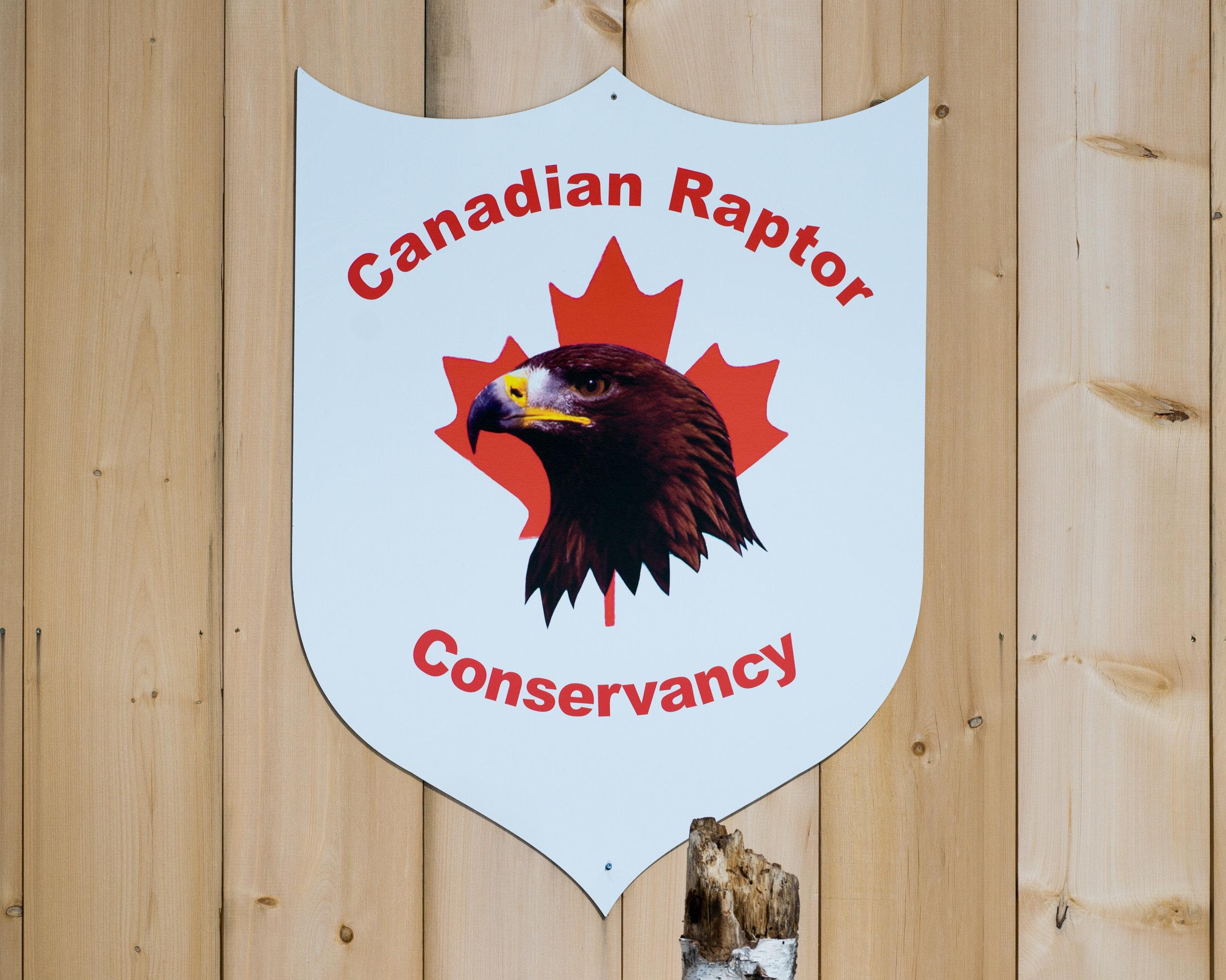 Canadian Raptors-1000.jpg