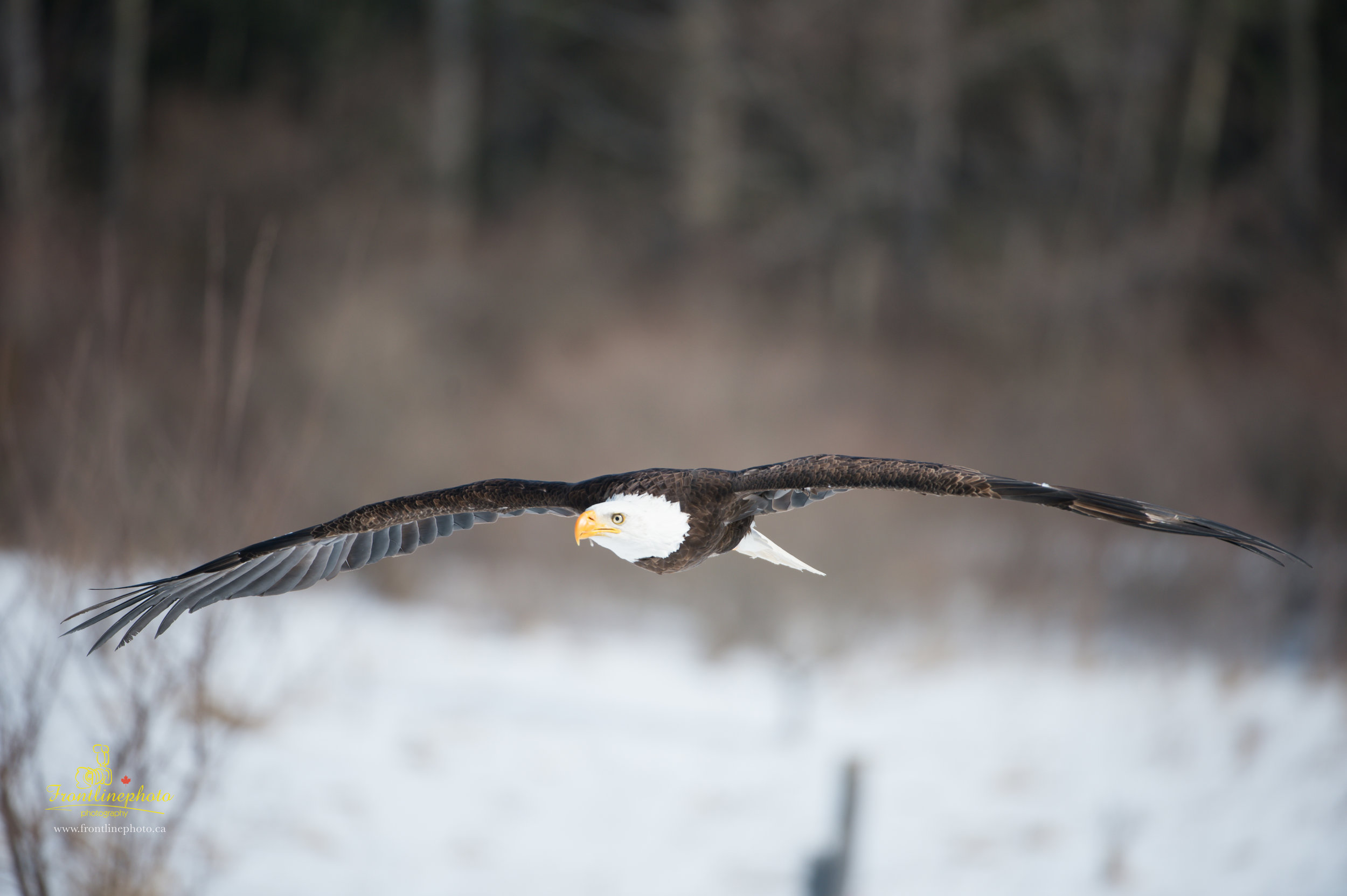 Canadian Raptors-1010.jpg