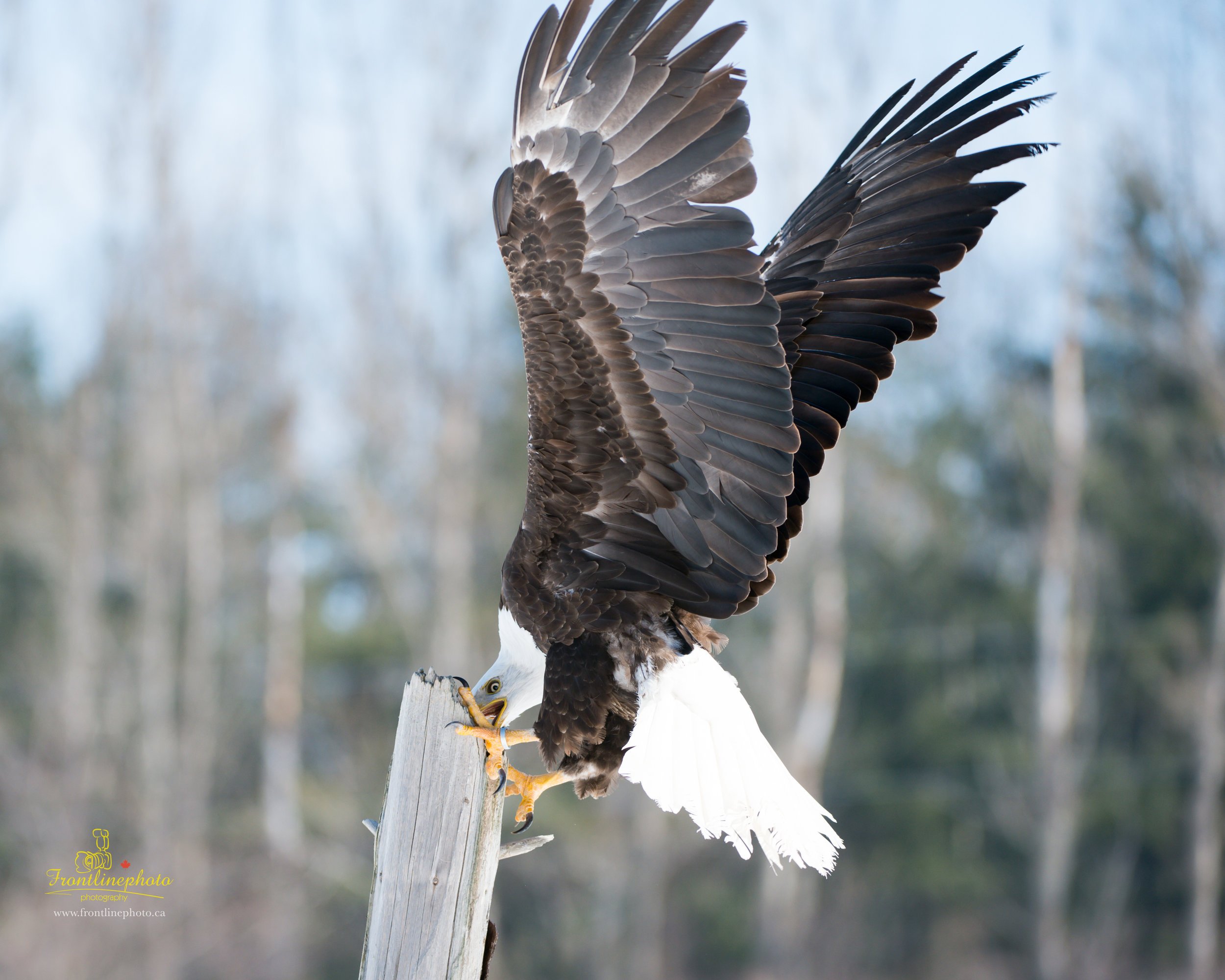 Canadian Raptors-1032.jpg