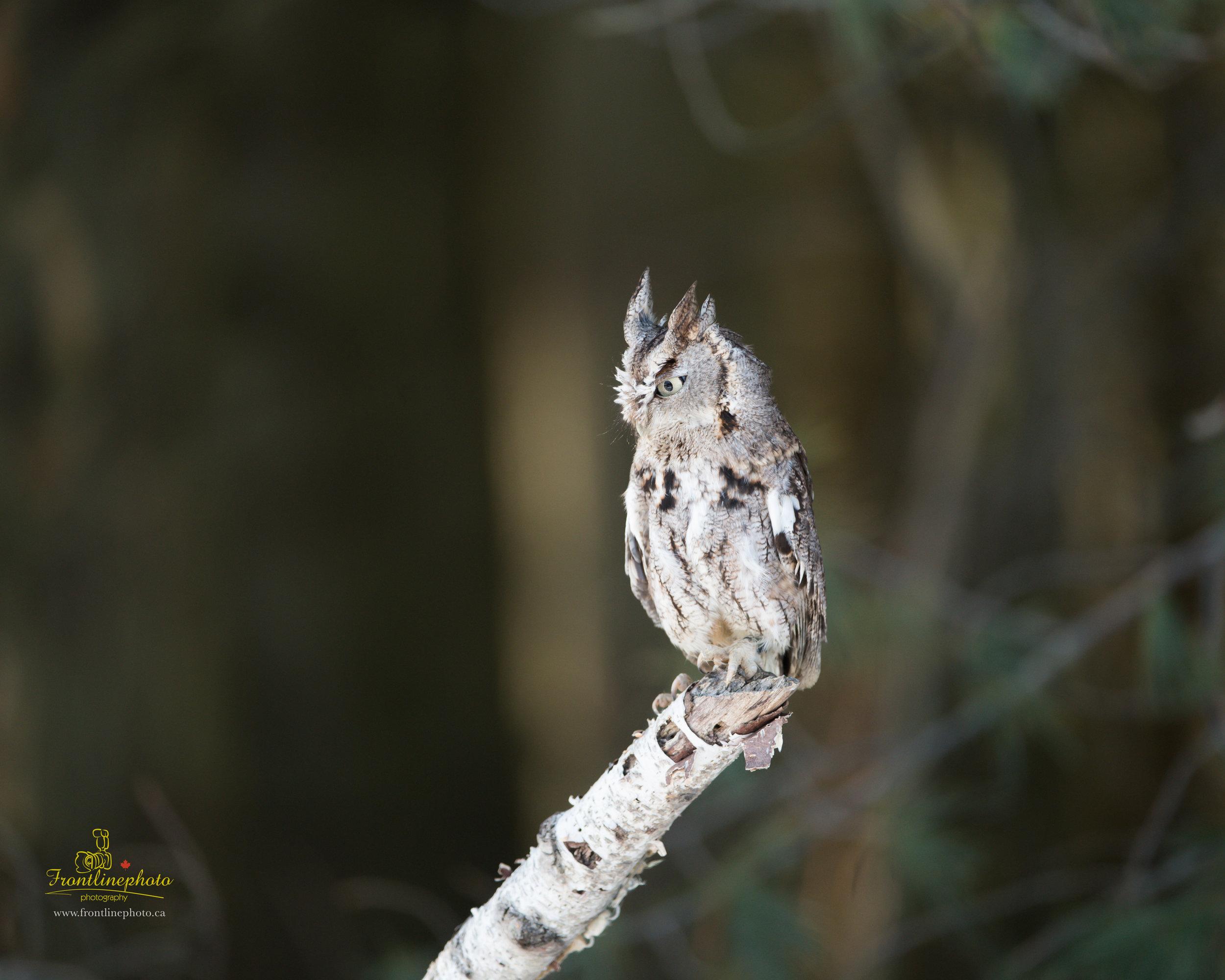 Baby Owl-1001.jpg