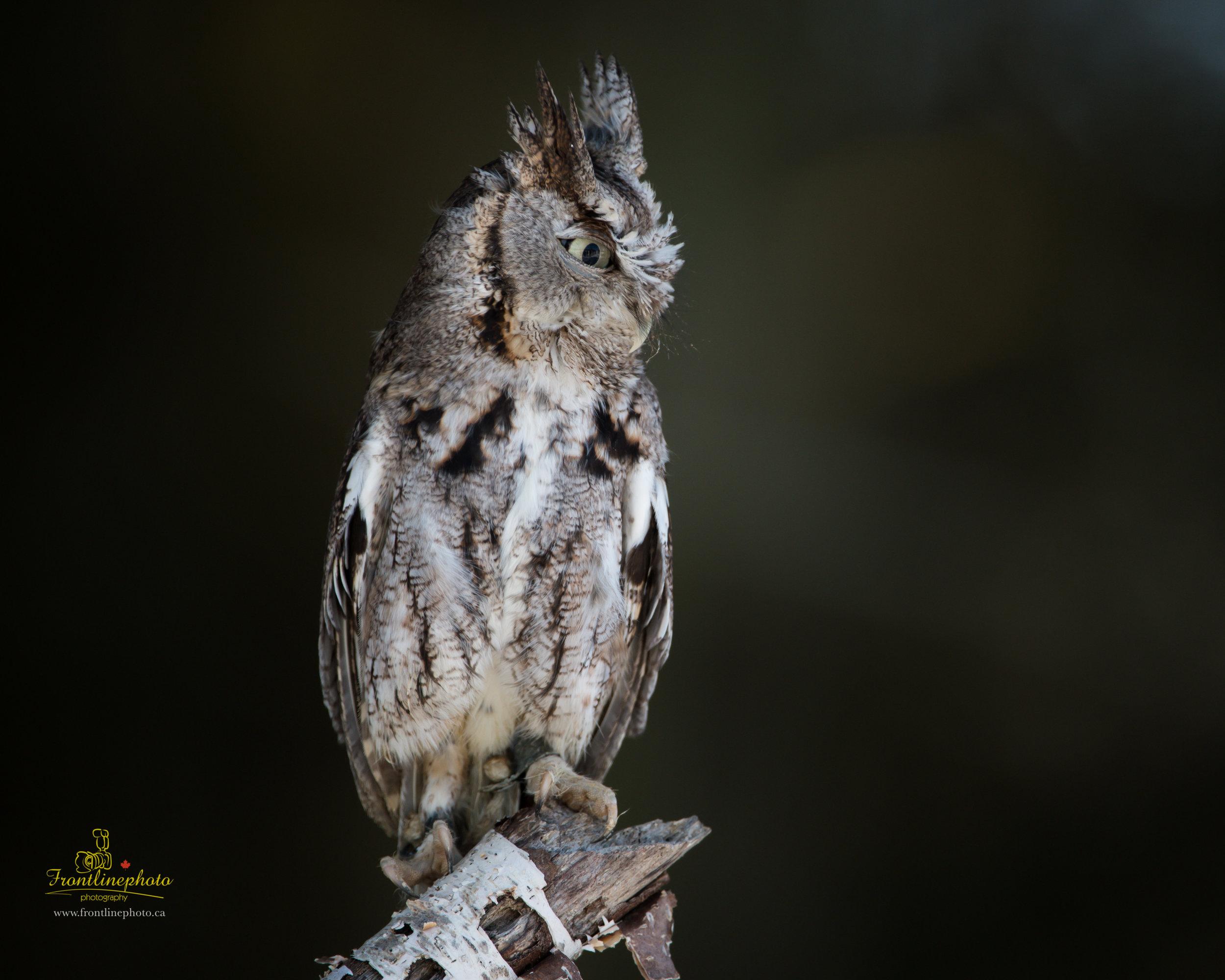 Baby Owl-1003.jpg