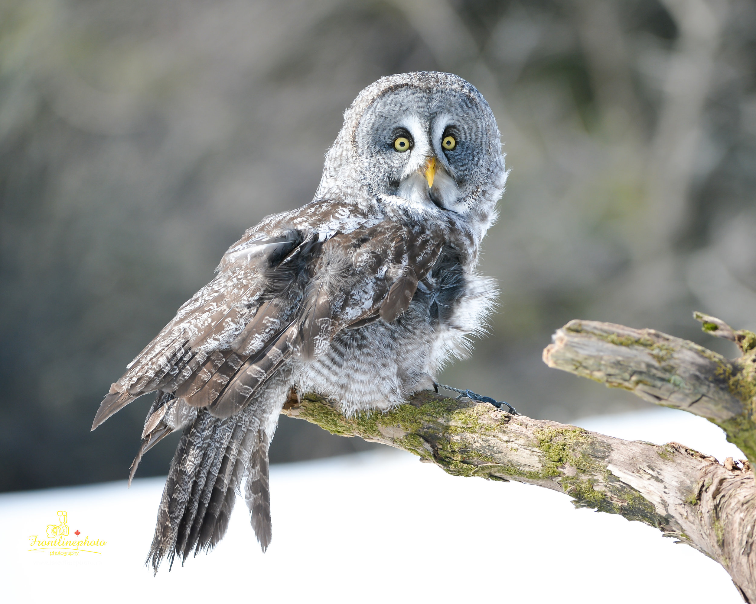 baby Owl-2001.jpg