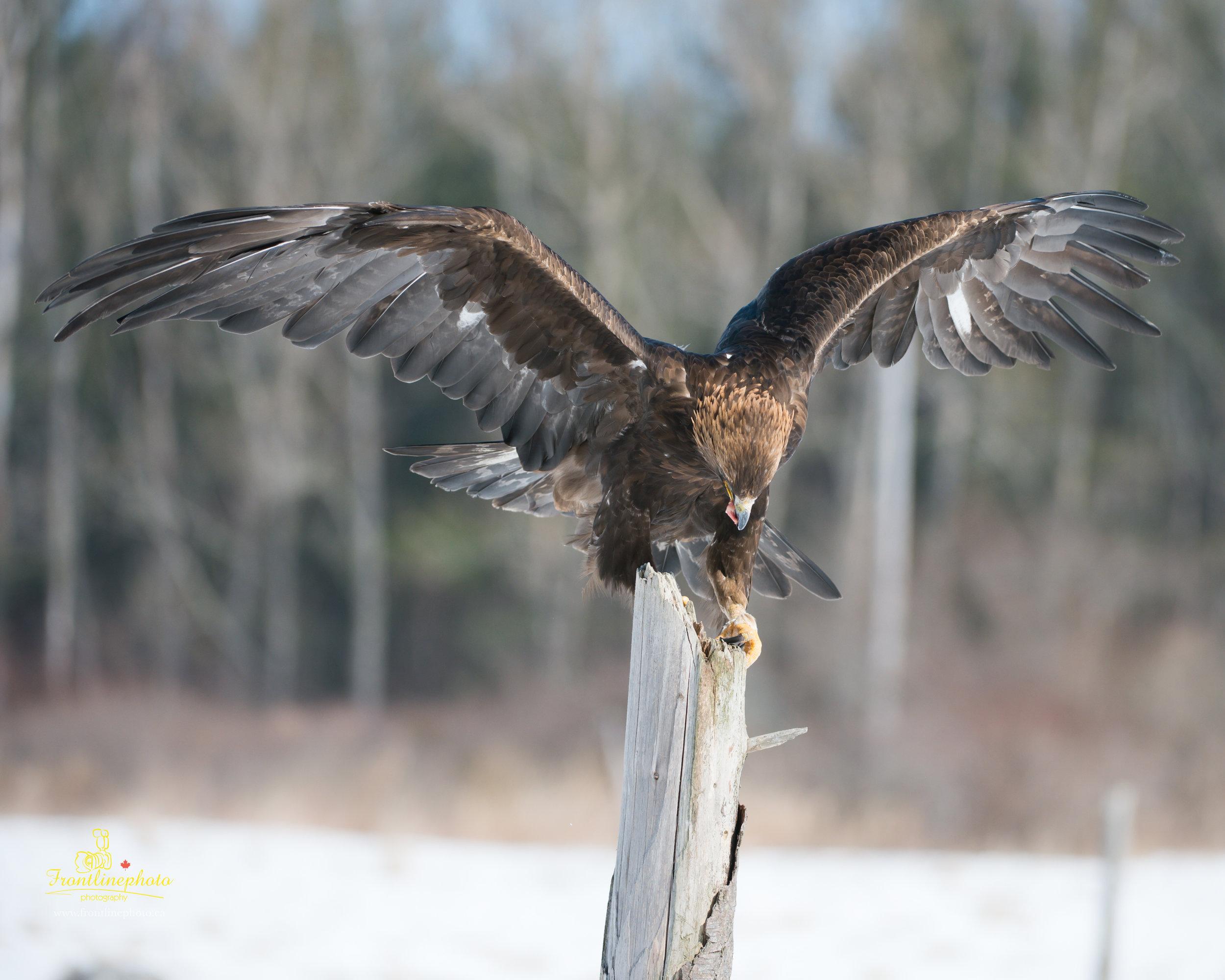 Hawk-1012.jpg