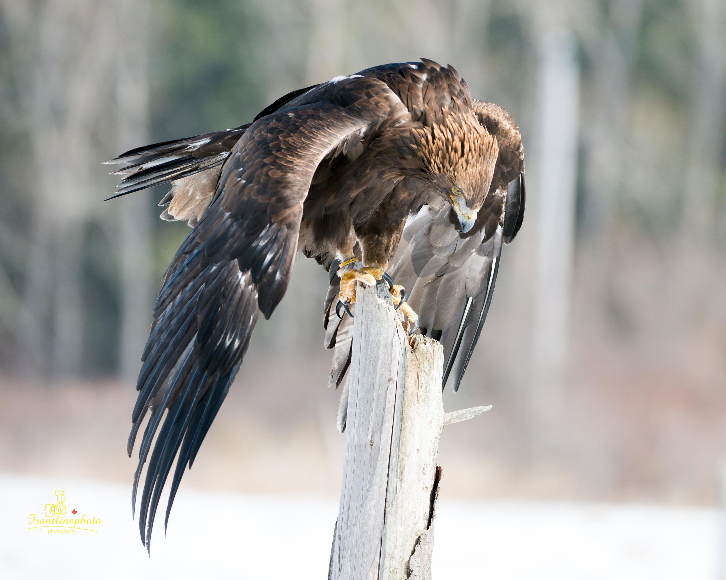 Hawk-1014.jpg
