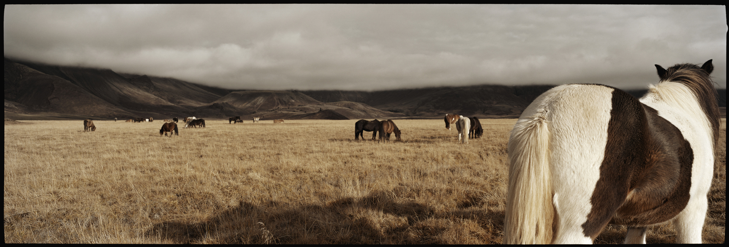 02.Icelandic horses, in a valley near Laugarvatn.